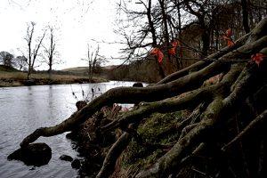 wharfe roots